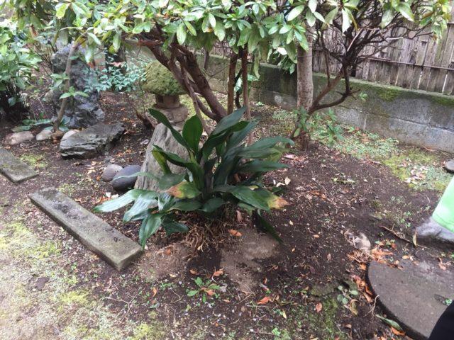 横浜市 解体工事実績-樹木